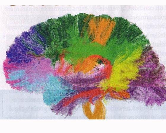 brain21