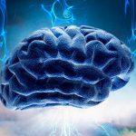 В мозге нашли барьер от галлюцинаций