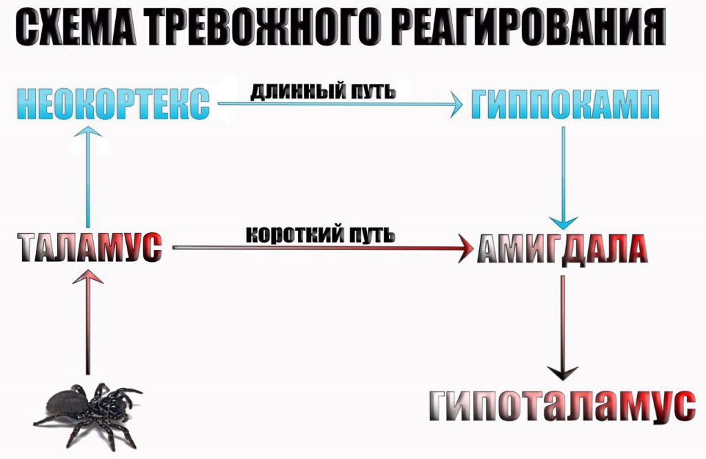 shema-trevozhnogo-reagirovaniya-1