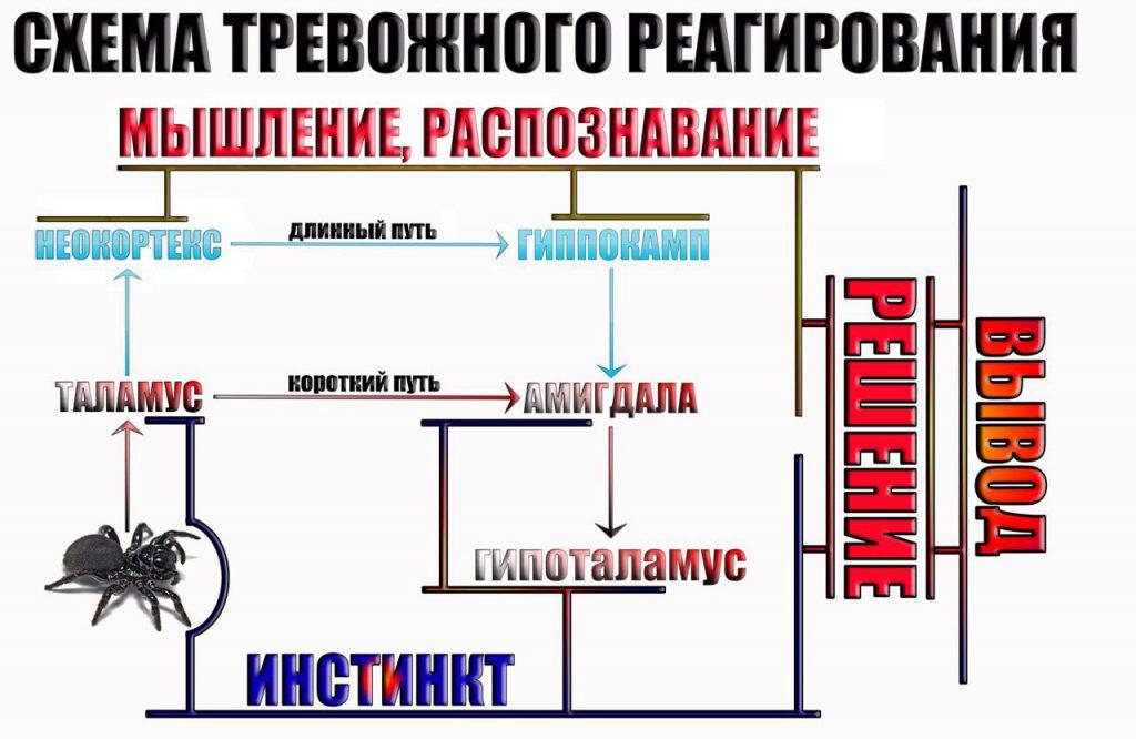 shema-trevozhnogo-reagirovaniya-2
