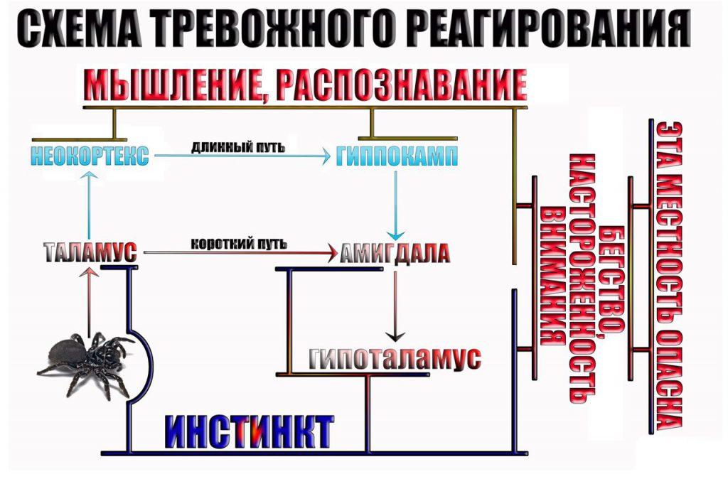 shema-trevozhnogo-reagirovaniya-3
