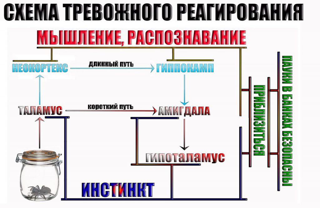 shema-trevozhnogo-reagirovaniya-5